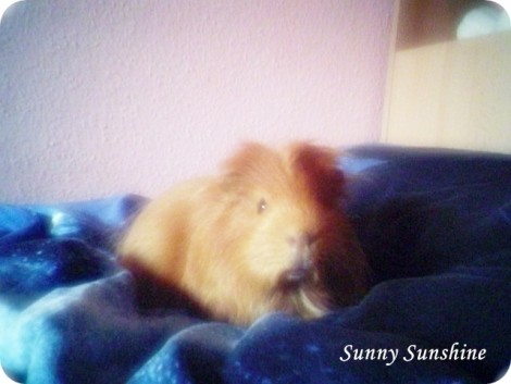 SUNNY unser Bubele